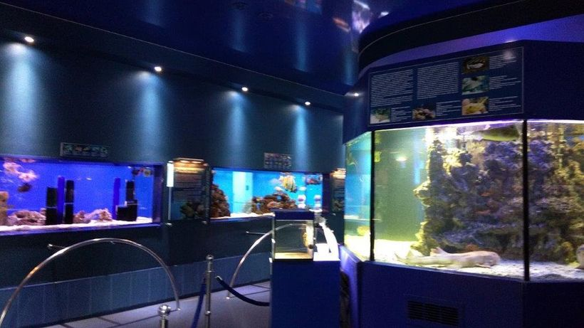 Aquarium exhibits illustrate different types of fish and sea life.