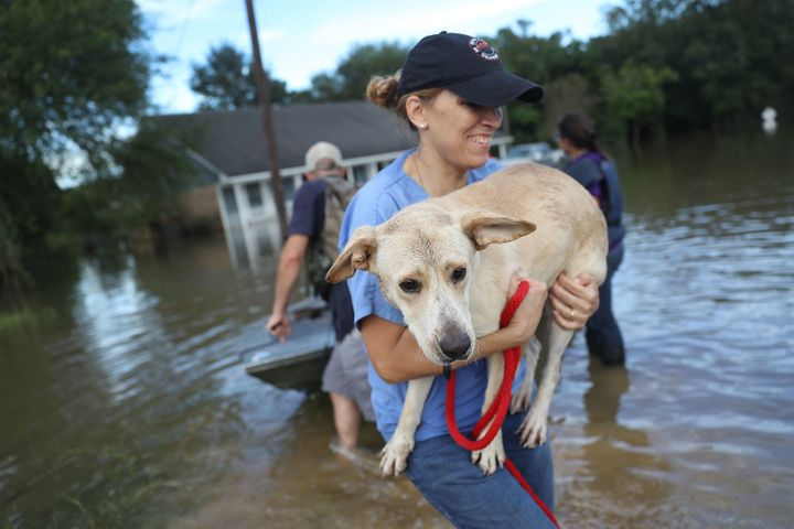 Ann Chapman from the Louisiana State Animal Response Team carries a dog she helped rescue from flood waters on August 15.