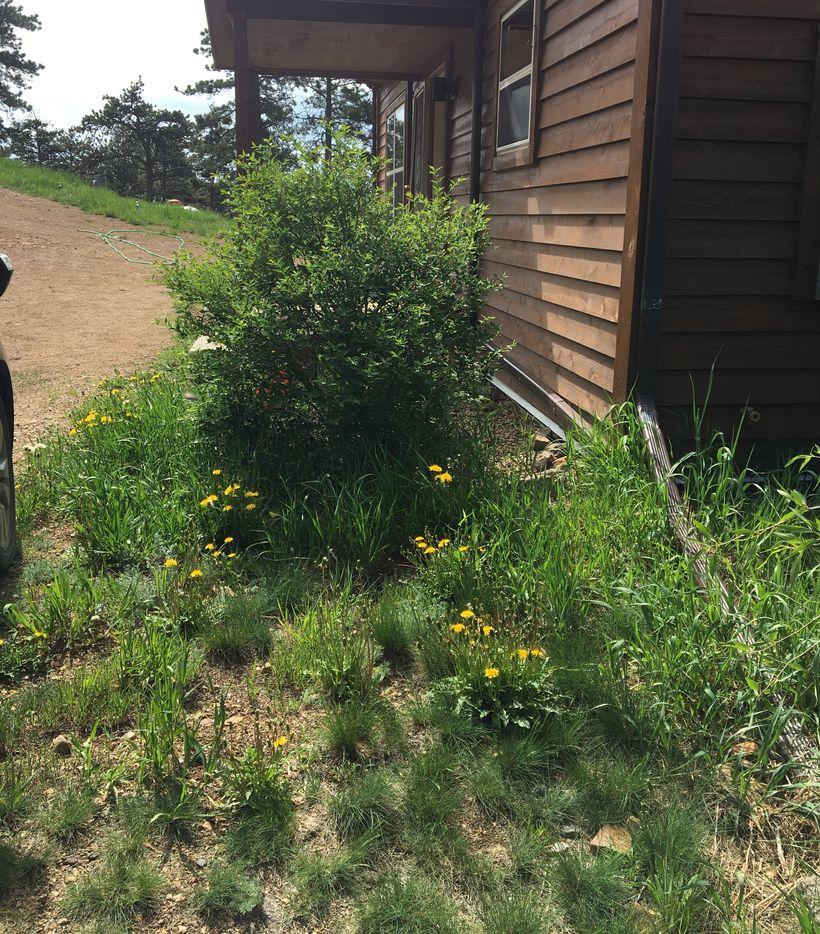Before: Weeds in the Garden