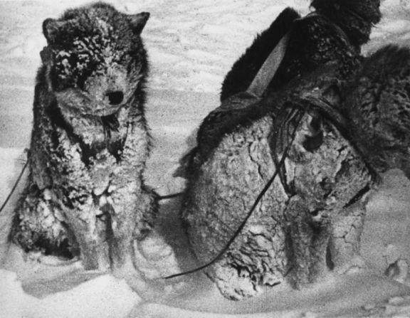 After Nanook and his family built an igloo for shelter,<br>his dogs were left outside for the night