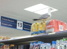 Angry Seagull Forces Cornwall Tesco To Close After Taking Over Pet Food Aisle