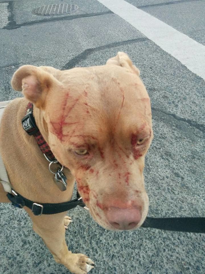 Bandida suffered facial scratches after being attacked by a cat.