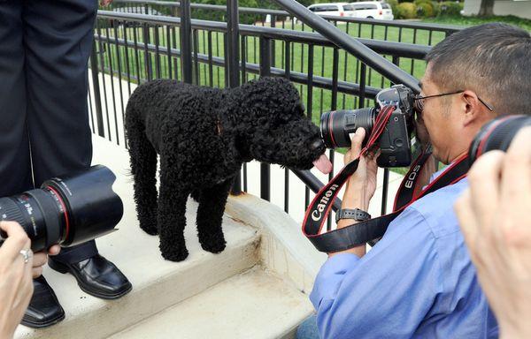 President Barack Obama's second family dog arrived at the White House on Aug. 19, 2013.