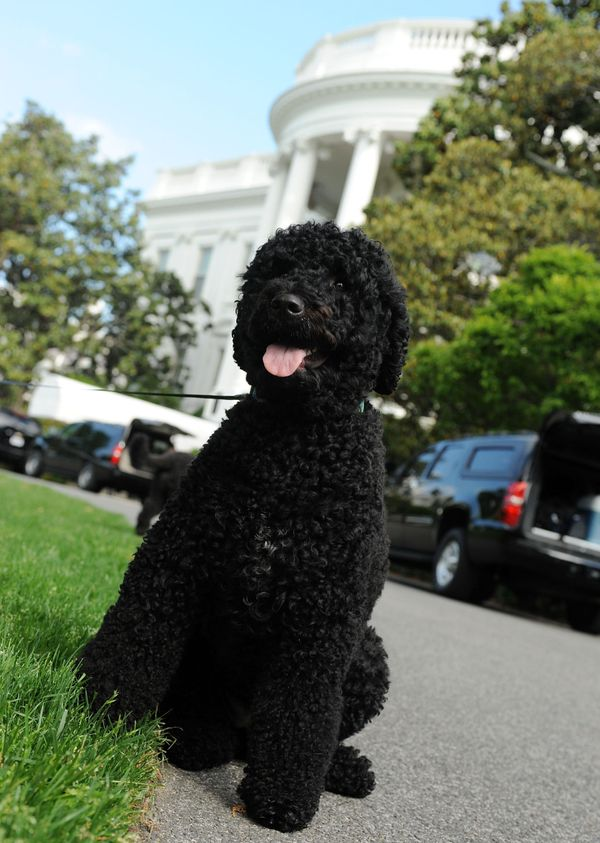 Sunny sat down duringa walk on the South Lawn of the White House on May 17, 2014.