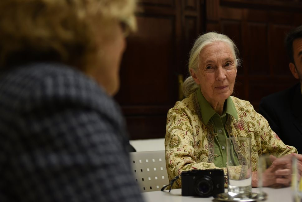 British primatologist Jane Goodall, 82, still travels the world with the objective of educating others about the ecosystem, b