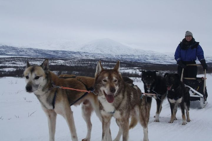 Or maybe I treat myself to a dogsledding trip in Abisko, Sweden. Priorities, right?
