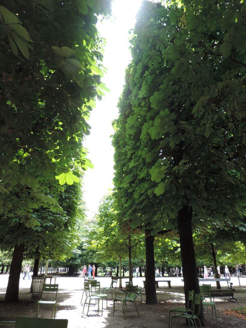 Lightof inspiration... under the chestnut trees, Jardin des Tuileries, Paris.