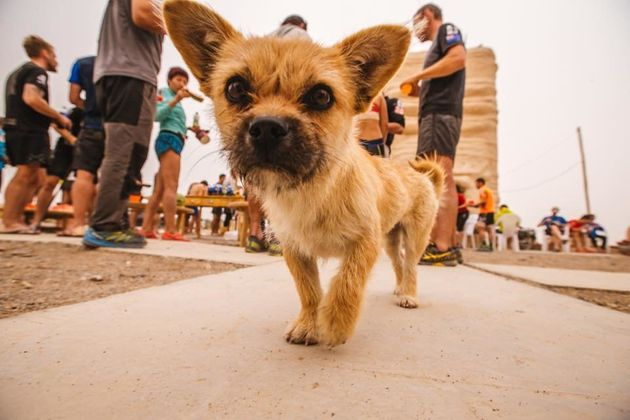Fears are growing for missing marathon dog