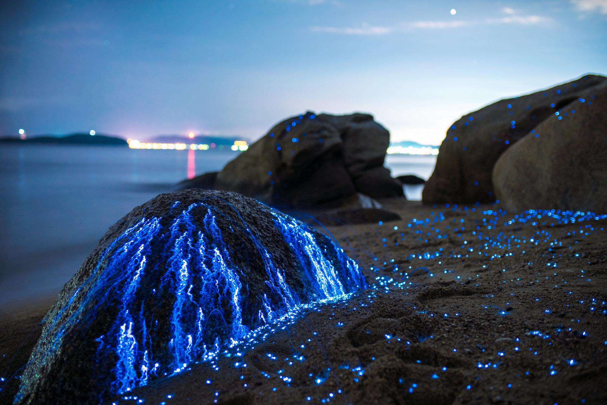 Bioluminescent sea fireflies glittering like diamonds on the rocks and sand. Okayama, Japan. July 2016