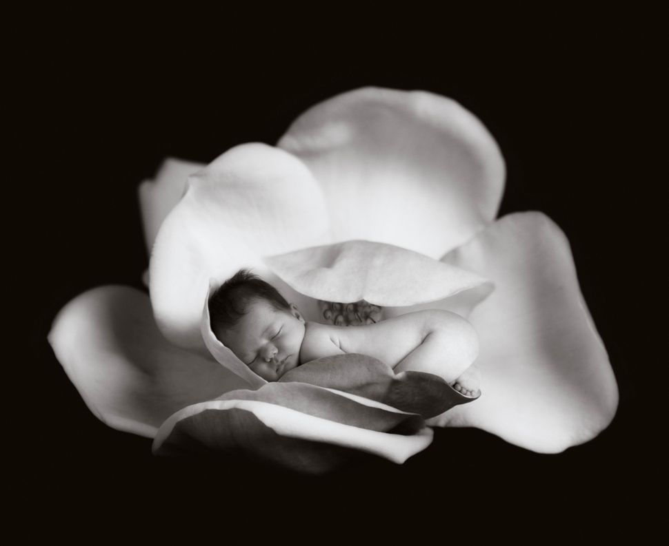 Anne Geddes The Photographer Who Put Babies In Flower Pots Is Still Making Art