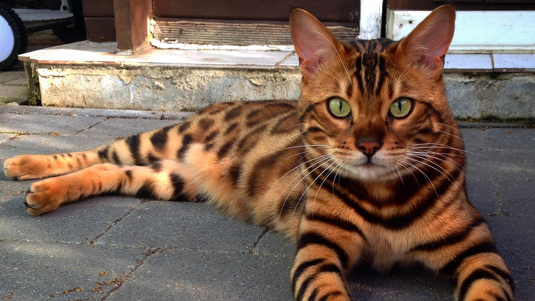 This Striped And Spotted Cat's Fur Is Mesmerizing The Internet