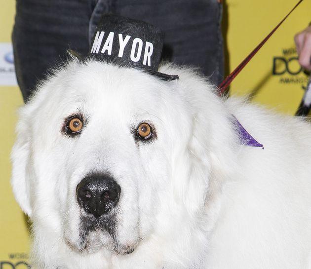 Dog Named Duke Mayor Of Minnesota