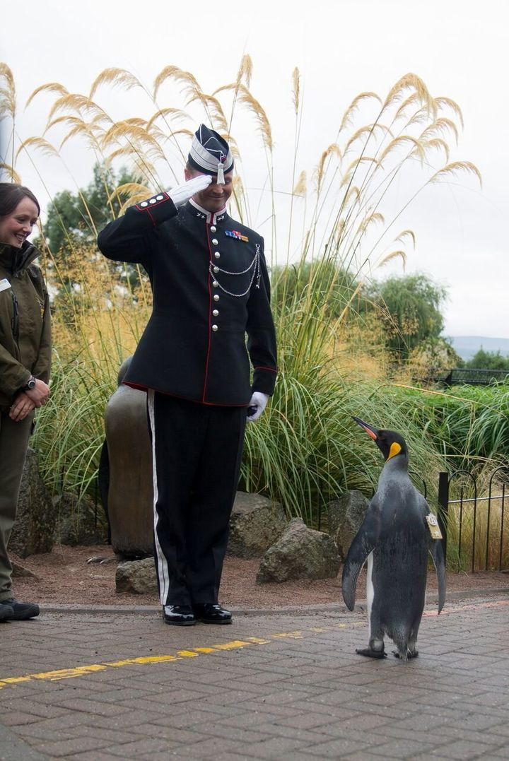 Lookin' good! Brig. Sir Nils Olav is seen inspecting a soldier during Monday's ceremony.