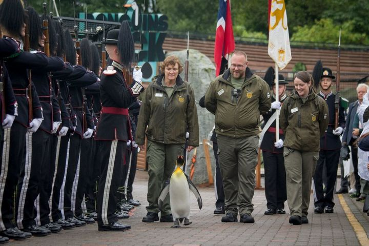 The regal penguin was knighted back in 2008. He's seen inspecting more than 50 soldiers.