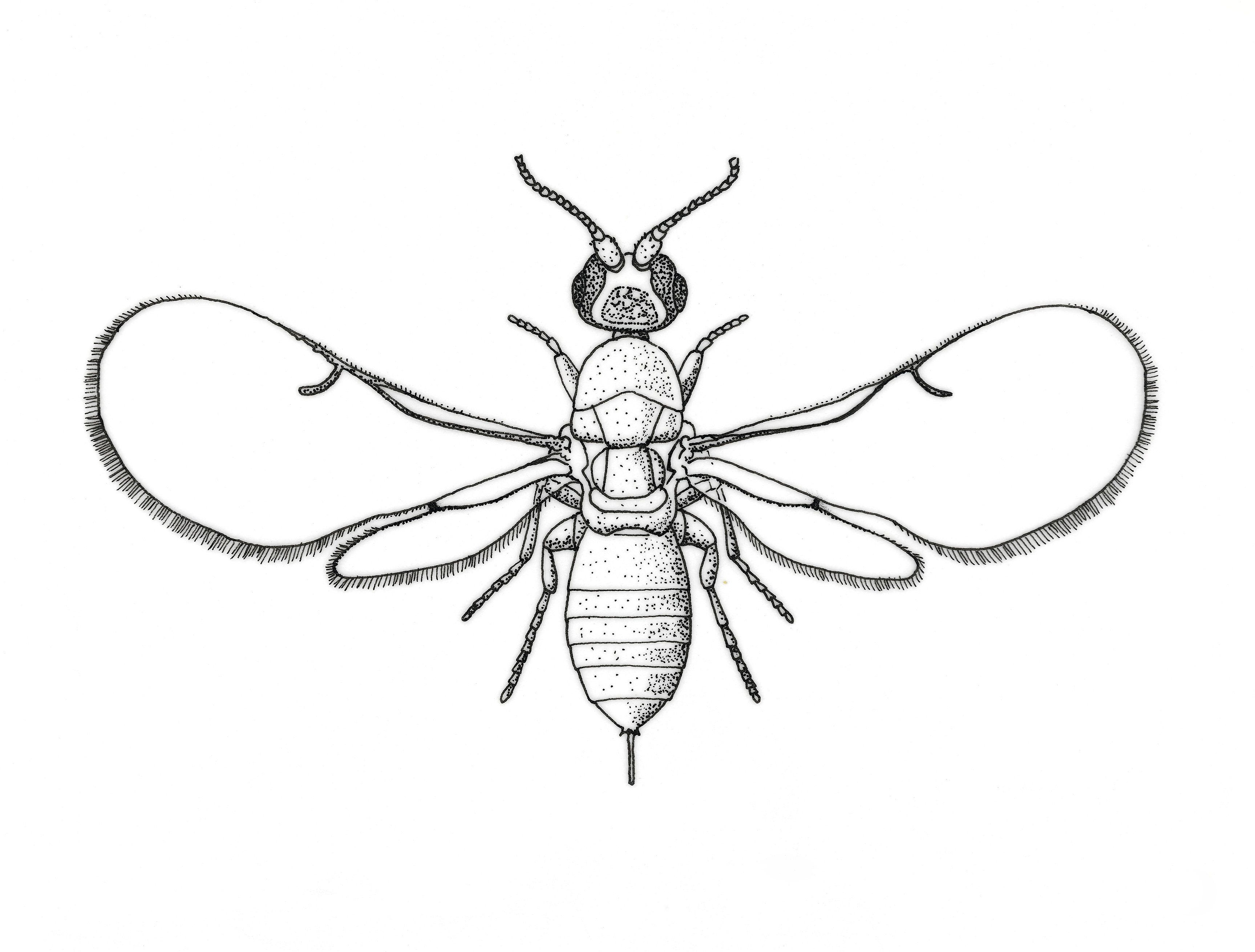 you ll never be able to unlearn what figs are huffpost life Lots of Cute Bees drawing of a fig wasp