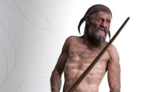 """Adrie and Alfons Kennis Utzi reconstruction in Bolzano.from museum website:From the 1st of March 2011 until the 15th of January 2012 the South Tyrol Museum of Archaeology will be entirely dedicated to the Iceman, bypresenting the special exhibition Ötzi20The famous Chalcolithic mummy and his equipment have attracted the interest of many researchers since their discovery 20 years ago. Moreover, Ötzi has been the subject of countless publications, has inspired artists and esoteric enthusiasts, has been a companion for children and adolescents learning about life during prehistory.An archaeological find that has become a world sensation as well as an important asset for the local economy. The exhibition Ötzi20 planned for 2011 will focus on the Iceman and on his impact on scholars and museum's visitors alike. To mark the occasion the museum space will be totally transformed: on an area of 1,200 sqm, it will display the results of the most recent scientific studies, the often extravagant theories of the media on Ötzi's life and death, together with gadgets, curiosities and many lesser known aspects surrounding this sensational find.The Museum commissioned the Dutch brothers Adrie and Alfons Kennis to create a new, naturalistic reconstruction based on scientific principles. His watchful gaze today meets visitors to the Museum, shaping our conceptions of the Stone Age inhabitants of the Alpine regions. Ötzi gives our history a """"face"""" in the truest sense of the word, moving and fascinating people from all over the world.South Tyrol Museum of ArchaeologyVia Museo/Museumstraße 43, I-39100 Bolzano/BozenInformation & reservationtel: +39 0471 320 100(Monday-Friday: 9 am - 12 pmand 2.30 pm - 4.30 pm)fax: +39 0471 320 122email: museum@iceman.itmedia contact: Martin.Gotter@iceman.itphotos taken may 9  2011 by Robert Clark."""