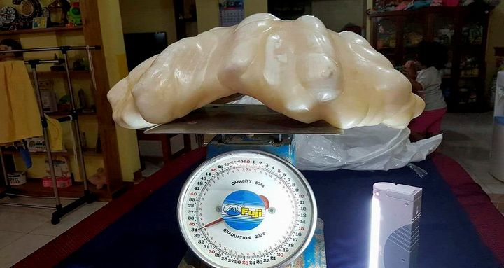 A man in the Philippines discovered what might be the largest pearl in the world.