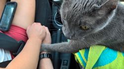 Heartbreaking Moment Cat Holds His Owner's Hand Before He's Put