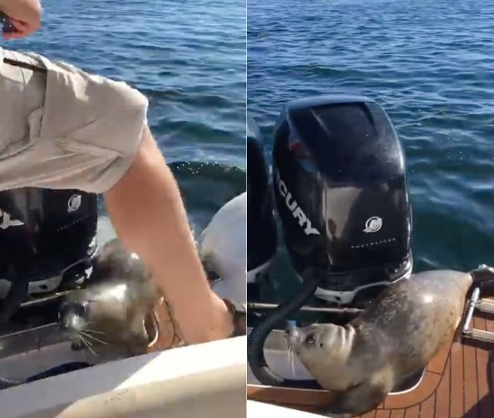 The seal caught the boaters by surprise when it suddenly jumped aboard and made itself at home.