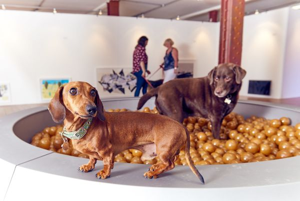 "George the dachshund and Trebor the labrador enjoy ""Dinnertime Dreams"" — an oversized 10-foot-wide dog bowl filled"