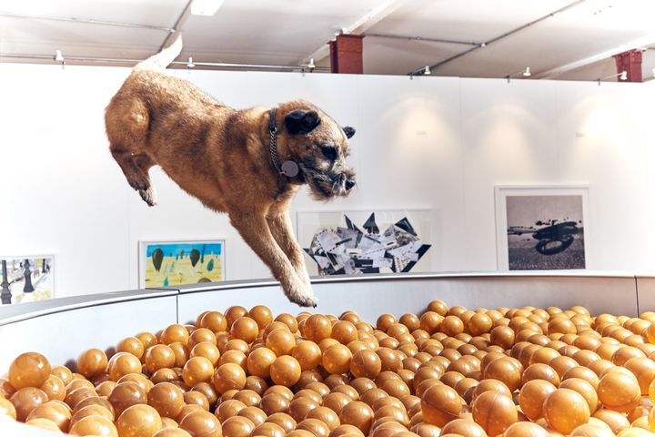 "Border terrier Bobbie jumps into &ldquo;Dinnertime Dreams.&rdquo;<a href=""https://www.huffpost.com/entry/art-for-dogs-dominic"