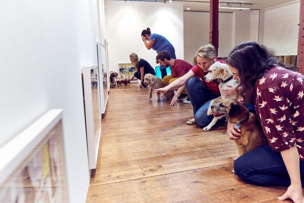 Dogs and their owners look at some of the artworks.