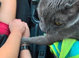 Touching Photo Shows Cat Holding Hands With Owner In Final Car Ride