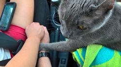 Touching Photo Shows Cat Holding Hands With Owner In Final Car