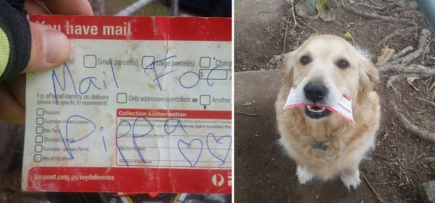 Mailman Creates Special Deliveries For Dog Who Lives To Get