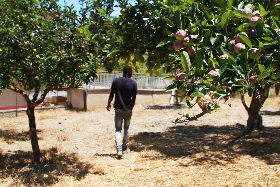 One of the farmhands walks in between fruit trees on the property run by Caritas in Ciminna.