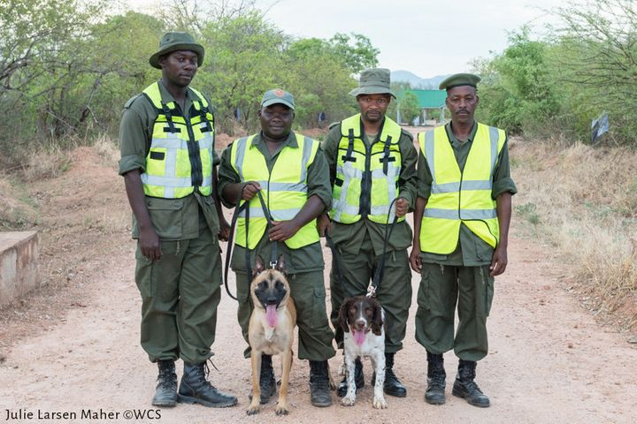 Jenny, left, and Dexter pose for a photo with Tanzanian authorities. The canine unit is the country's latest tool in the fight to end poaching and the trade of illegal wildlife products.