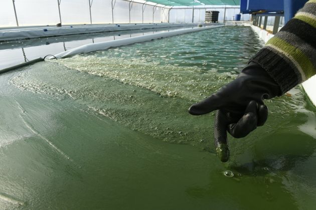 Spirulina processing plant in