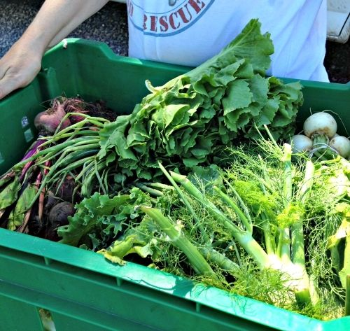 Vegetables from Roots to River Farm, Solebury, PA
