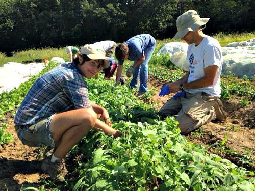 Volunteer gleaners working on Labor Day 2015