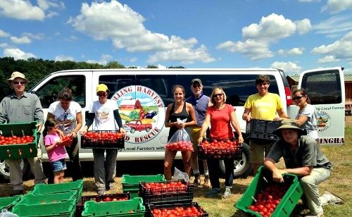 Gleaners after the tomato harvest