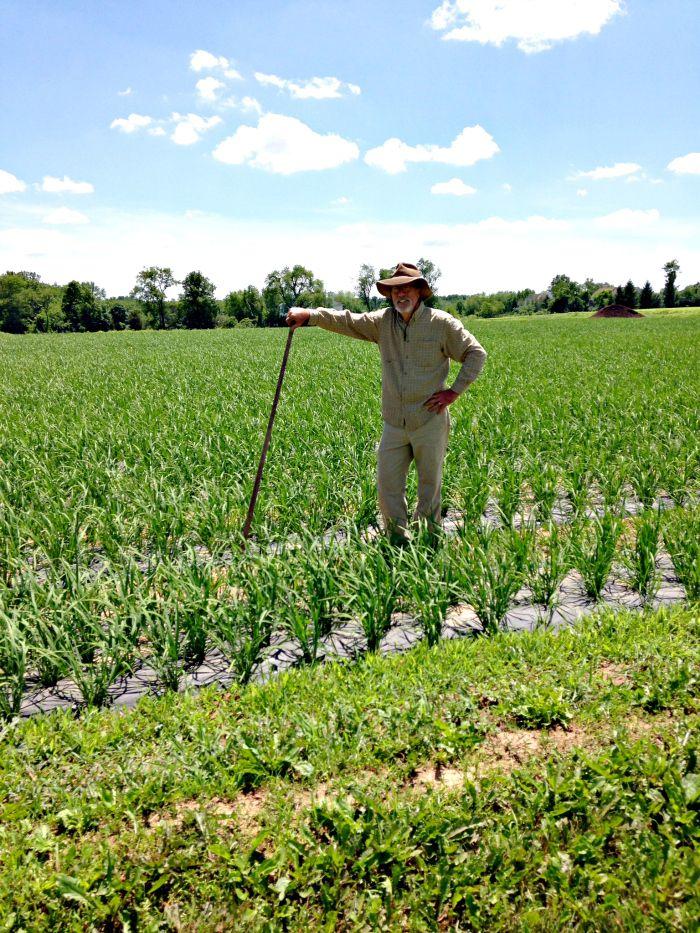 Jim Lyons, owner/farmer, in the rice fields at Blue Moon Acres, Pennington, NJ