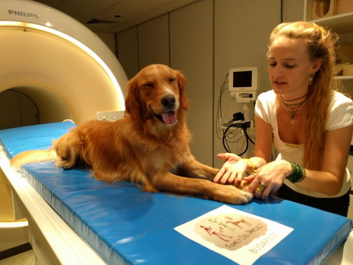 Researcher Anna Gabor and Barack the dog.