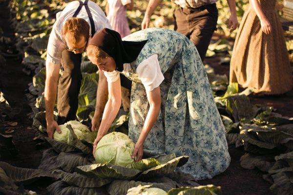 Women collecting cabbage.