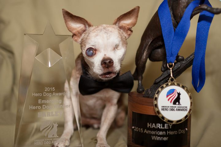 Harley with his American Humane Association Hero Dog Awards.