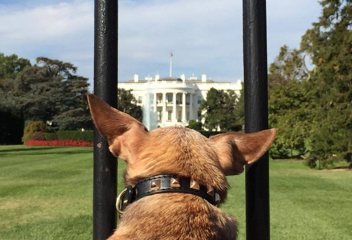 Harley at the White House, Washington, DC