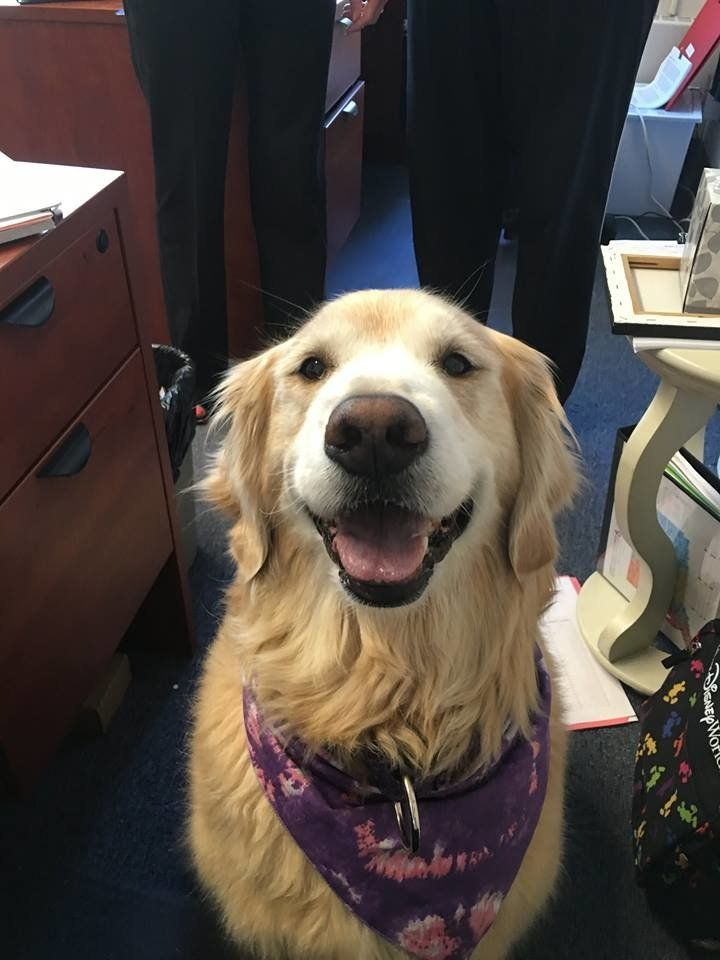 Lily, the therapy dog.