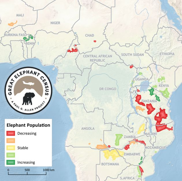 A New Elephant Census Shows The Devastating Impact Of