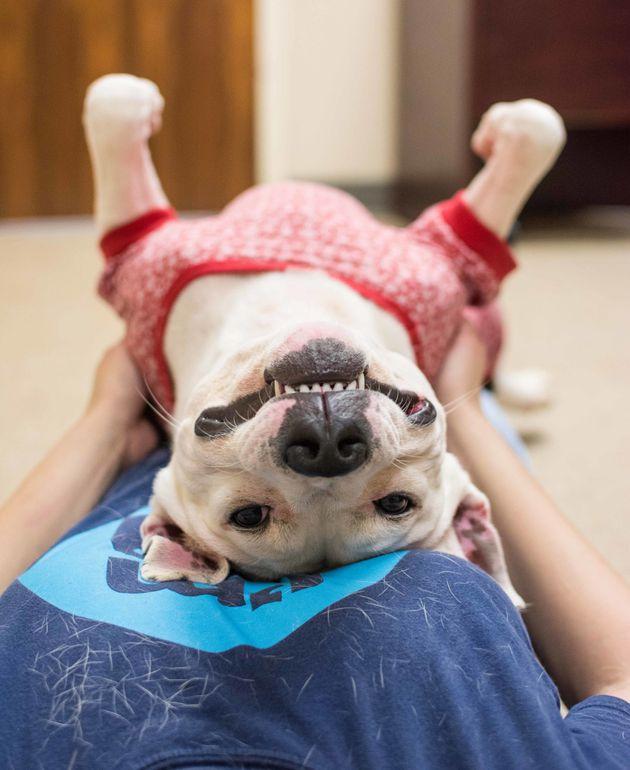 「犬にパジャマを着せてみたよ」保護団体がパジャマパーティーを提案する理由