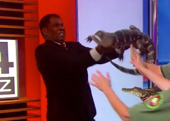 News anchor freaks out on camera with alligator in arms