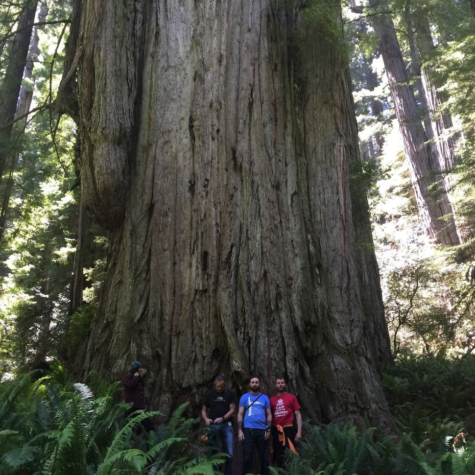 Archangel's climbing team poses ata giant tree.