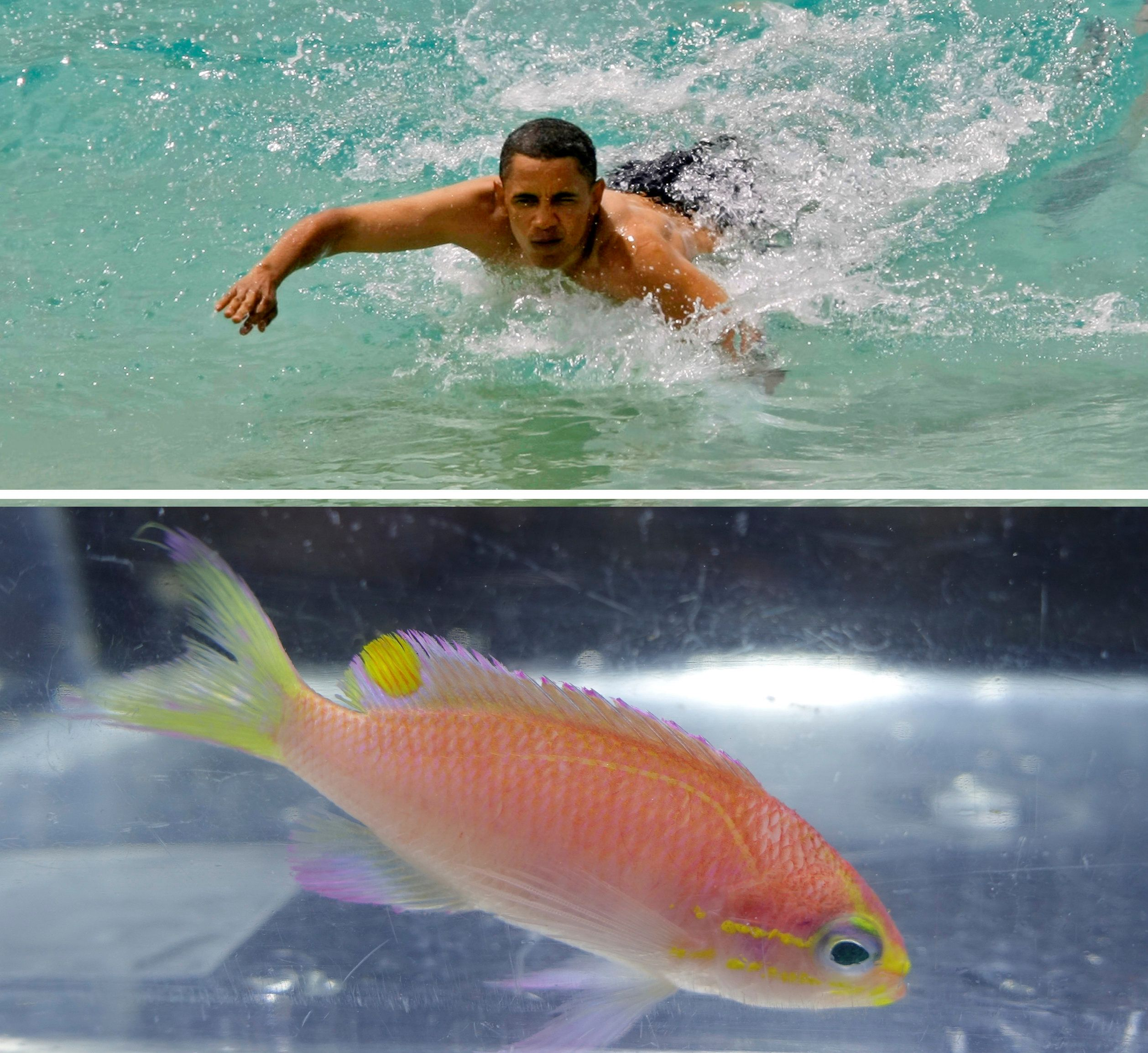 Top:BarackObama body surfs at Sandy Beach on the island of Oahu in 2008. Bottom:After...