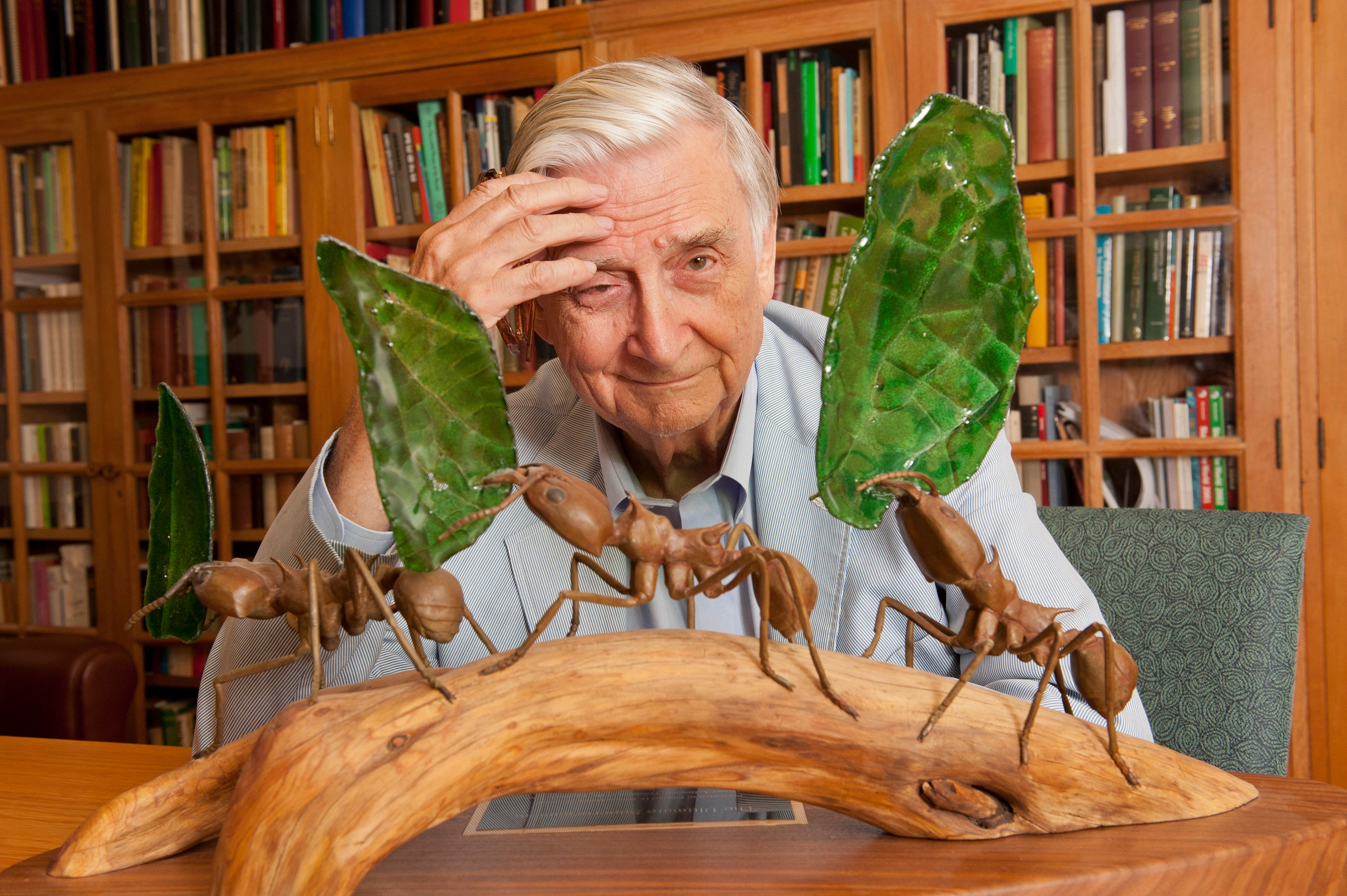 Harvard University Professor E.O. Wilson in his office at Harvard University in Cambridge, MA. USA. Professor Wilson is a biologist, researcher, theorist, naturalist and author. He is considered to be the world's leading authority on the study of ants. (Photo by Rick Friedman/Corbis via Getty Images)