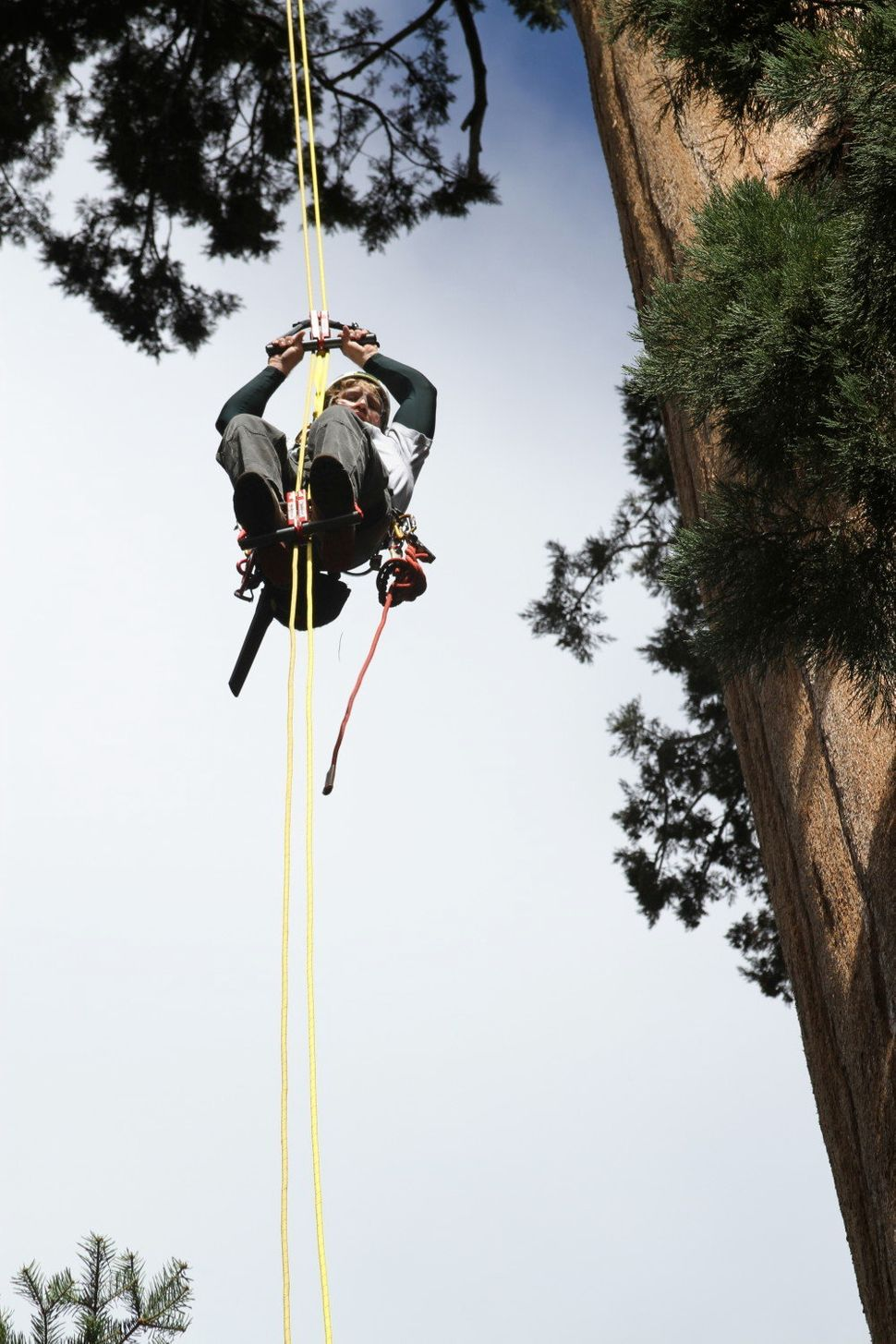Climbers Are Scaling The World's Tallest Trees In An Effort To Save