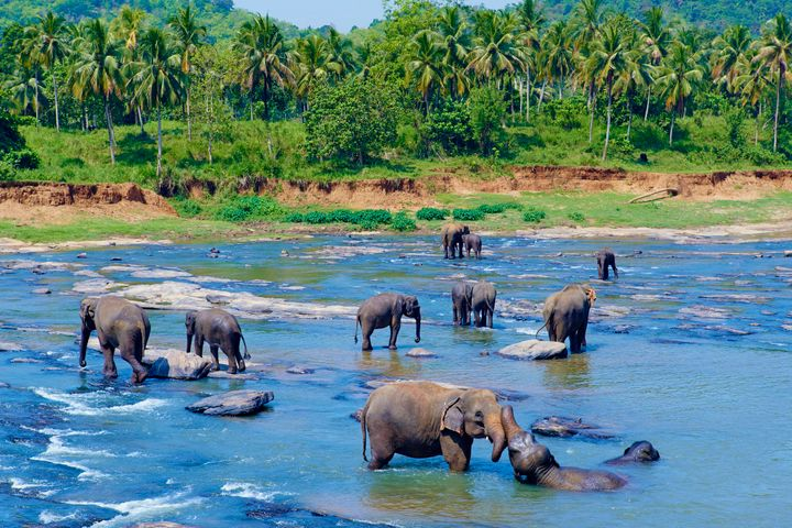 Sri Lanka is a paradise for animal-lovers.