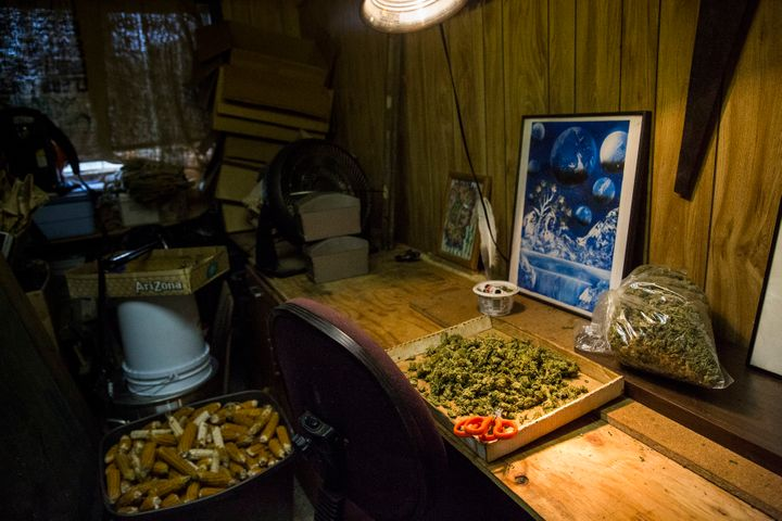 Terri sat in an office chair in this cramped shack, trimming marijuana buds. She and three other trimmers were paid $200 for